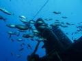 Divemaster-Internship-Tenerife-18