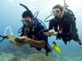 PADI Divemaster internship - internship Divemaster - Divemaster mapping dives