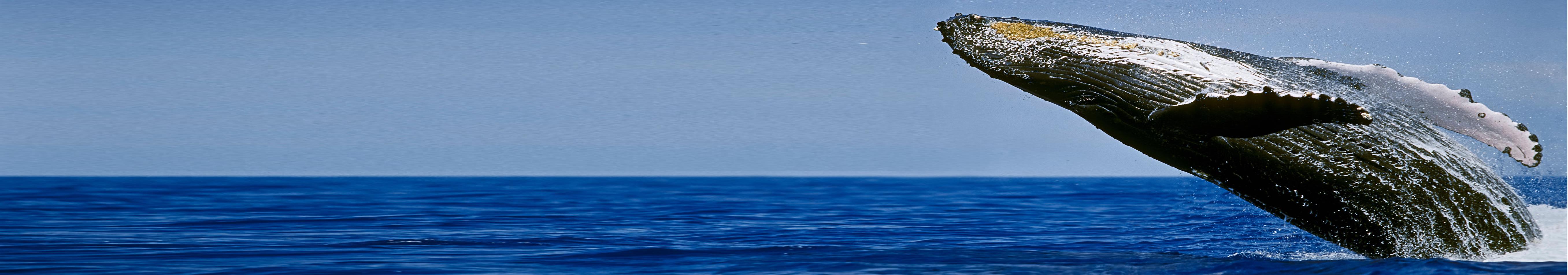 Divemaster internship - PADI Divemaster internship - Divemaster internship Academy - Tenerife Whale