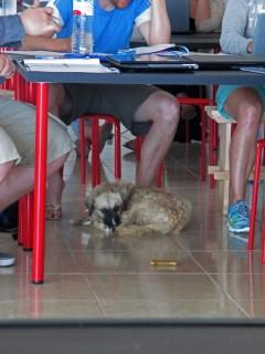 Divemaster dog in Tenerife