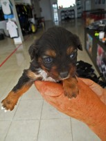 Abandoned puppies - Dive Centre to the Rescue