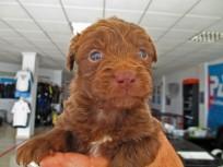 Rescue puppies in the Dive Centre