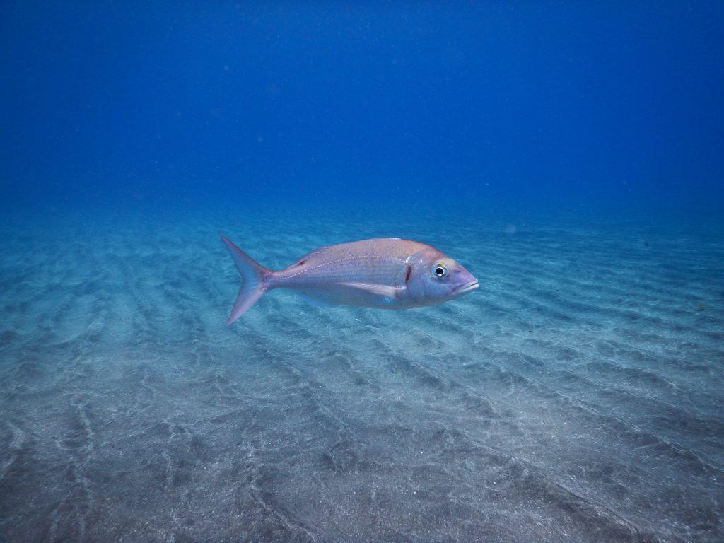 PADI Fish ID Spec