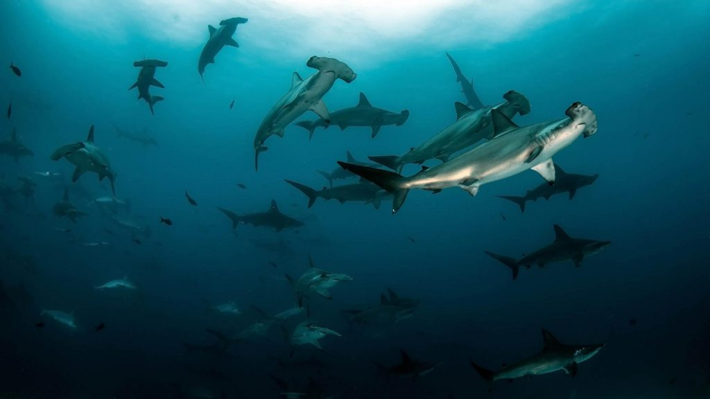 PADI aware-shark-conservation