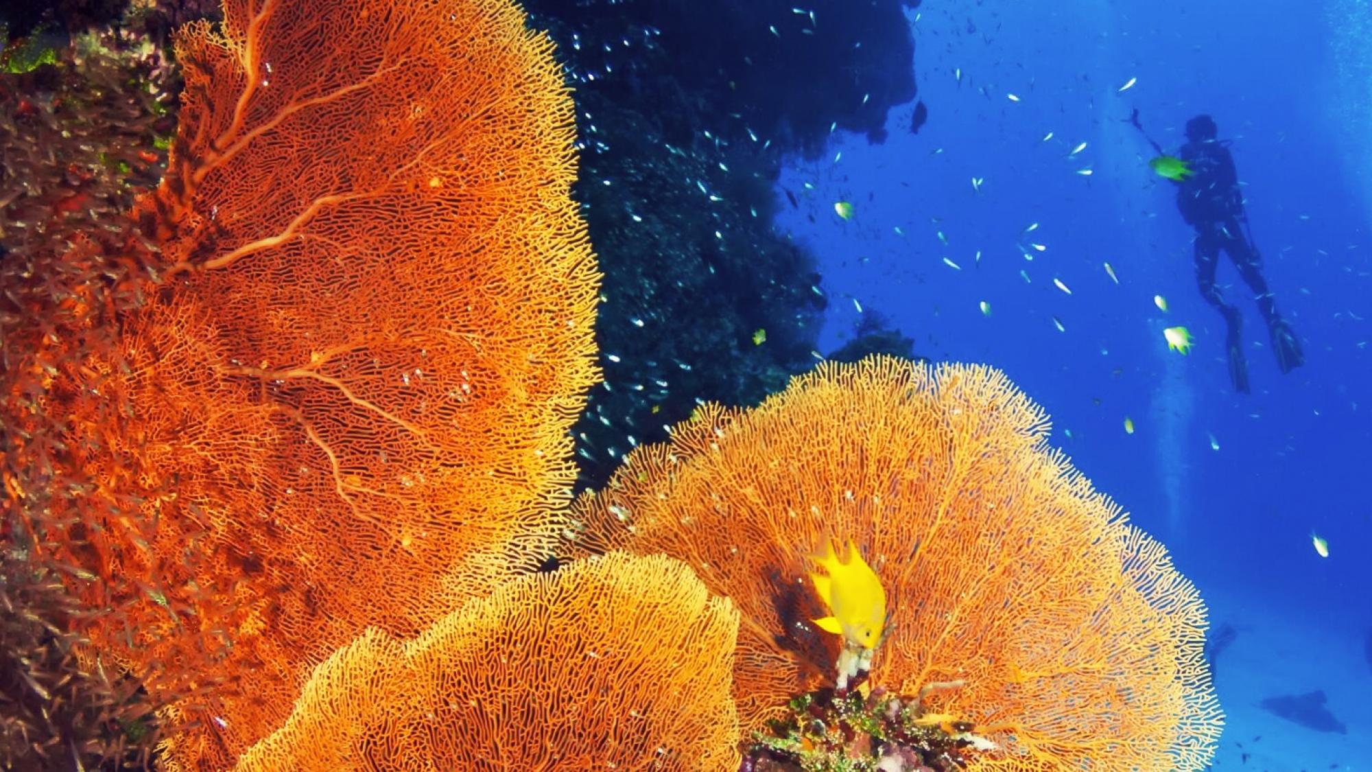 PADI coral-reef-conservation-diver_0