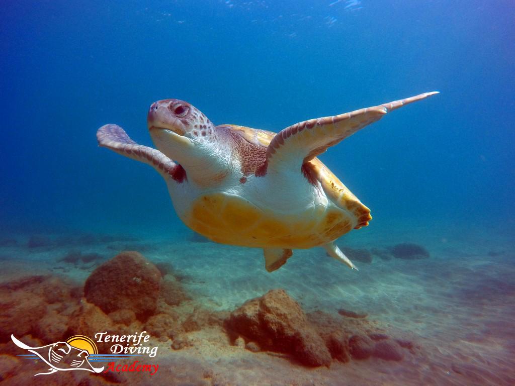 PADI Open Water Diver course Tenerife